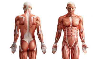 el cuerpo humano una maquina perfecta